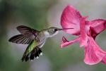 1D RGB 9149 Hummingbird 10