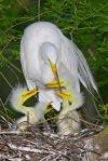 2577 Egret Family