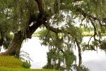 Midland Plantation, Charleston, SC