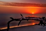 Sunrise on Folley Beach, Light painting on the driftwood with a white LED light! Very LONG Exposure...