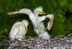 8419 Chicks Streaching