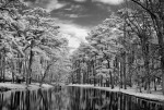 Oak Reflections, Infrared