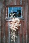 Infrared Window Plant