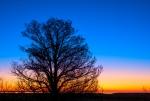 The Sunrise Tree