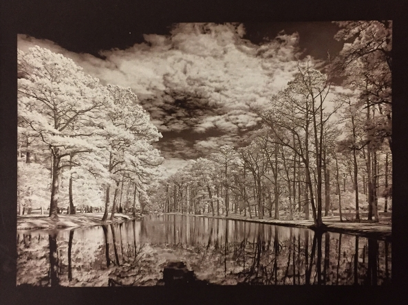 Oak Reflections in Infrared, Van Dyke Brown, Revere Platinum Paper, 3 Min Exposure