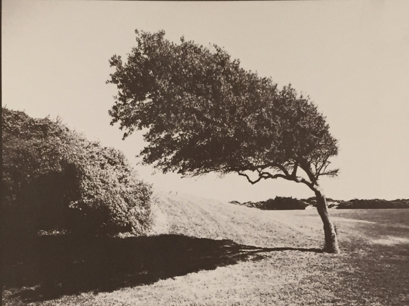 Bent Tree, B&W Negative