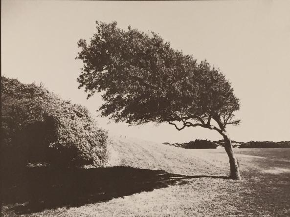 Bent Tree, B&W Negative