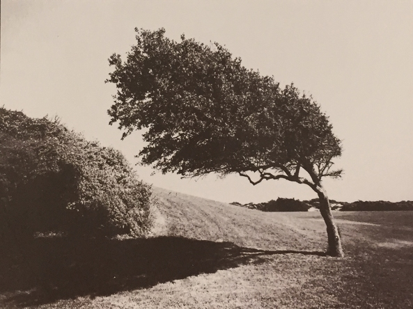 Bent Tree, VDB, w/ green negative