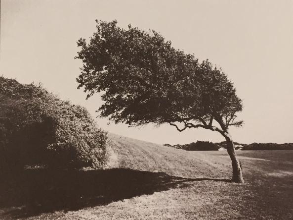 Bent Tree, VDB, w/ green negative